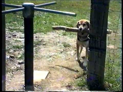 Funny Dog Revolving Door Fail
