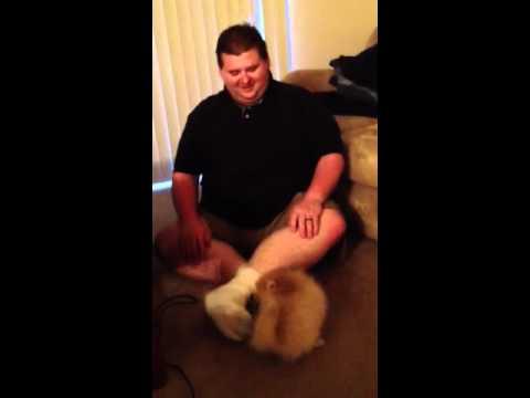 Gizmo attacks daddy's sock
