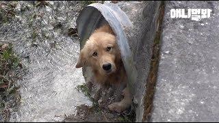 수로 속에 숨어 사는 리트리버 남매의 비밀 ㅣ The Secret Of Retriever Dog Siblings Living In A Dead End Ditch