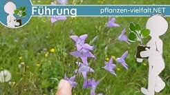 🔎 KW 19 - Wildpflanzen Führung 1/3 - (erste Maiwoche) - Wiesenblumen & Krautiges