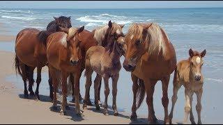 Ouragan Florence: les chevaux de Caroline de Nord ont la technique