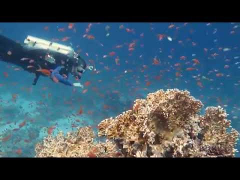 North & Dahab Liveaboard with Red Sea Explorers