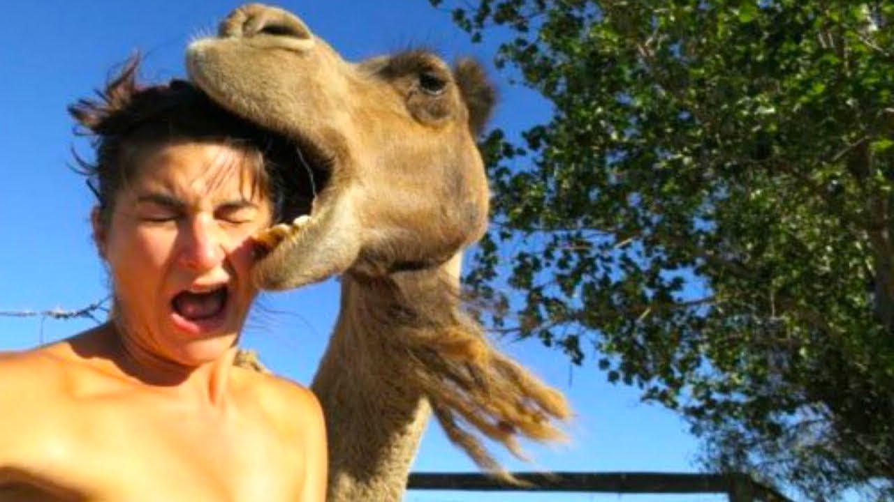 When Camels Attack