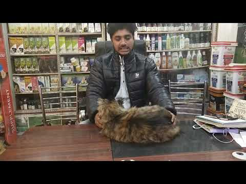 Bengal Cat Of Syed Tabrez From Banglore Youtube