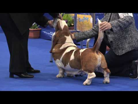 Manchester Dog Show 2017 - Hound group FULL