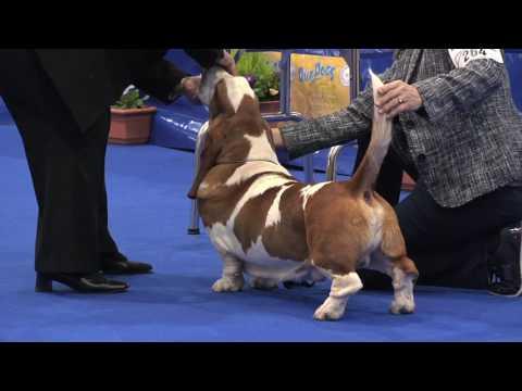 Manchester Dog Show 2017 - Hound group FULL