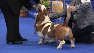 Day one at Manchester championship dog show saw two groups, the sec...