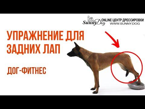 видео: Упражнение для задних лап собаки. Простые упражнения по Догфитнесу