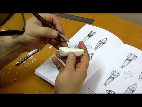 Dental anatomy, Maxillary central incisor carving