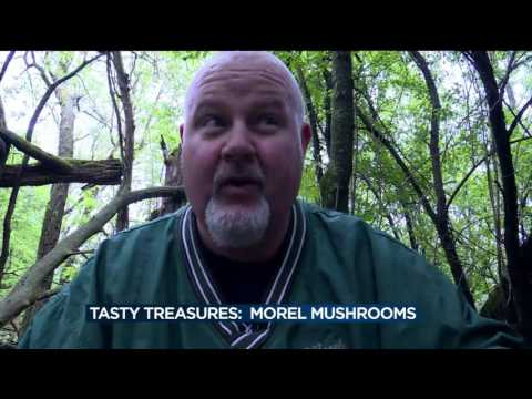 Live at Four goes hunting for morel mushrooms