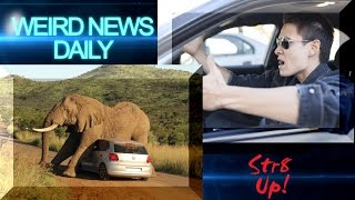 Elephant Chili Bomb, Atheist Vanity Plate and more! | Weird News Daily for Sunday, August 14, 2016
