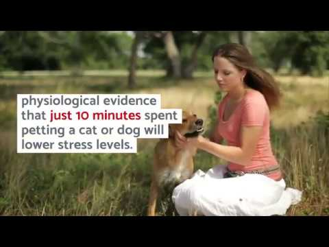 Just 10 Minutes With Cats, Dogs Tangibly Lowers Stress