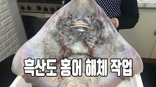 흑산도에서 건너 온 싱싱한 홍어 부위별 해체 작업 | …