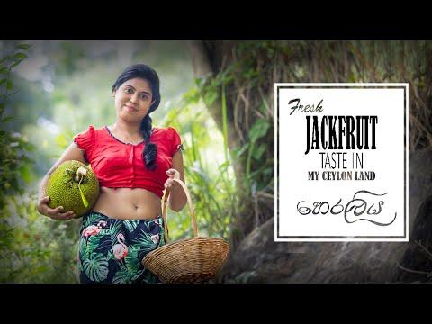 Fresh jackfruit taste in my Ceylon land     හෙරලි රසය    How to make food recipe in jackfruit