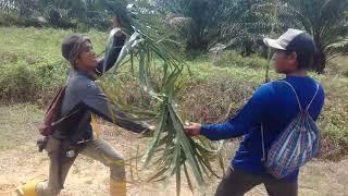 drama hiburan tki asal lombok