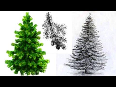 Как просто нарисовать ель