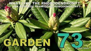 GARDEN (73) - WHAT LIKE THE RHODODENDRONY? Jak prawidłowo posadzić rododendrona.