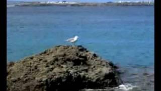 Kosheen vs. Kalkbrenner - Skylife And Sandcatch