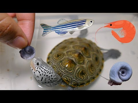 FEEDiNG TURTLE LiVE FOOD | Snails, Fish, Shrimp, Oh My!
