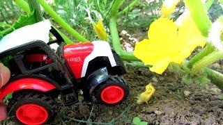Развивающее видео про трактор. Огород - овощи и фрукты