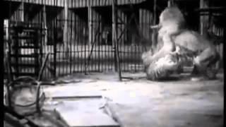 Тигр против лев(, 2014-11-23T05:16:00.000Z)