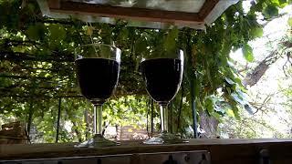 самодельный винный уксус/ на-кухне/ винный погреб