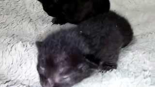 真っ黒な子猫なので・・・今回はちょっとライトを付けての撮影。可愛さ...