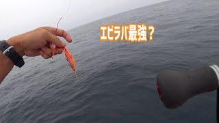 前回の続きです! 途中からポイントを移動し浅場で根魚釣り楽しんでます 数は沢山釣ってますが、サイズは期待しないでくださいw 【提供曲】...