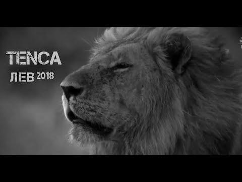 TENCA - Лев [VIDEO]