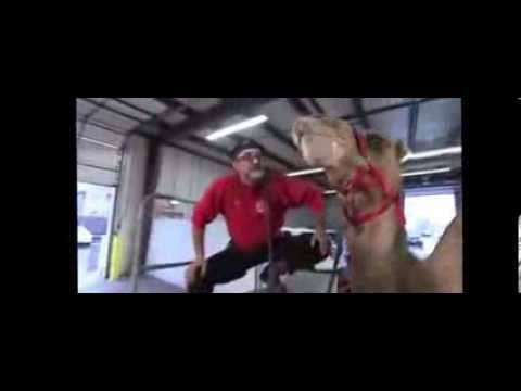 Andreas Chicago Camel Guy,Hump Day Commercial, Animal Rentals Chicago,Camel Rentals Chicago ,1