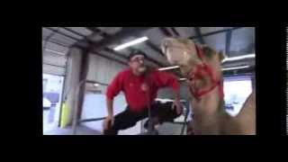 ▶ Call 815-600-6464 / Camel Visits WGN News ,GEICO  Hump Day Camel Commercial, Camel Rental, Rides