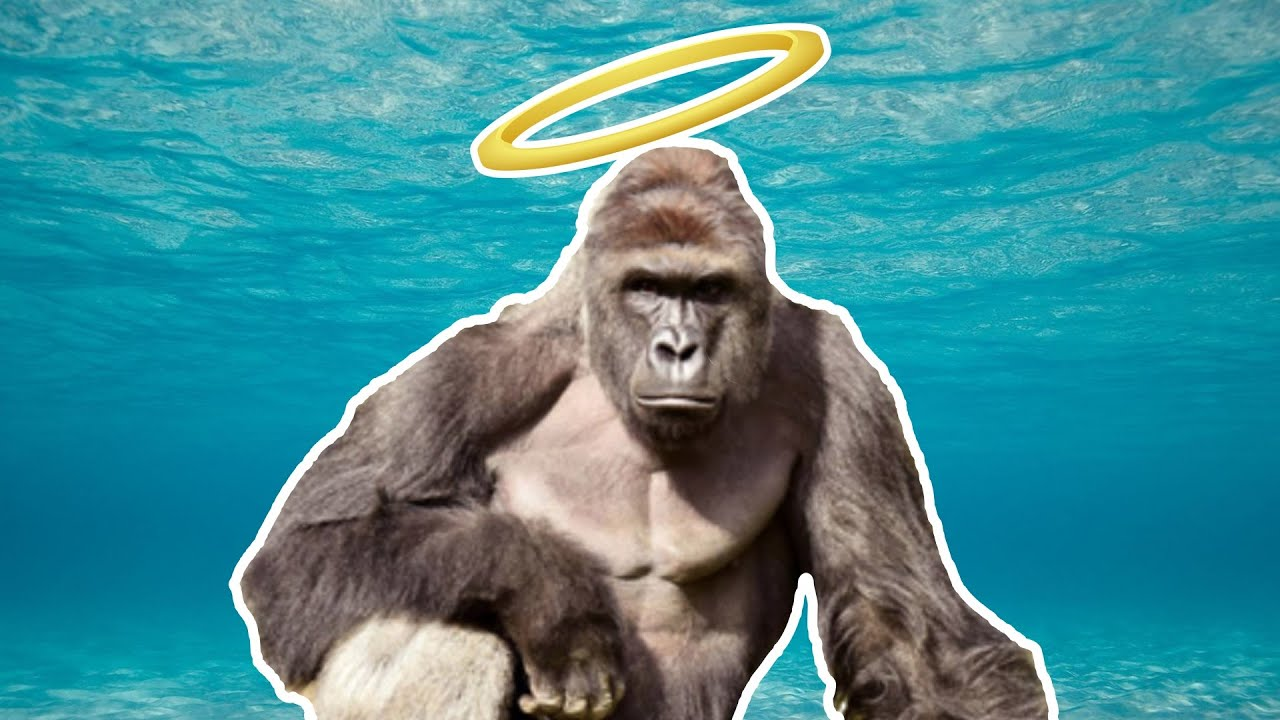 Found harambe feed and grow fish online multiplayer for Feed and grow fish online