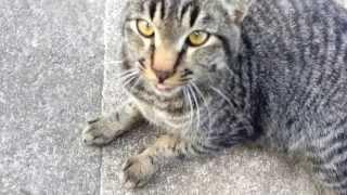 くっついてくる野良猫ちゃんv thumbnail