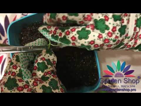 How to tie up pot plants with garden wire