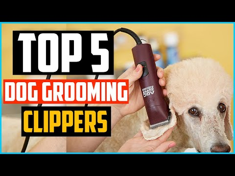 Top 5 Best Dog Grooming Clippers Review In 2020 Youtube