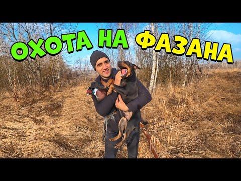Охота на фазана с Боббой! Фазан запеченный в фольге.Изба хоббитов спустя время.