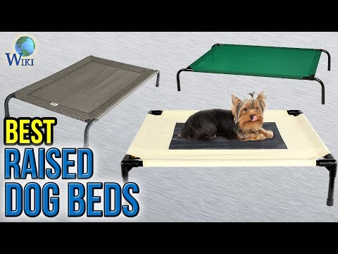 10-best-raised-dog-beds-2017