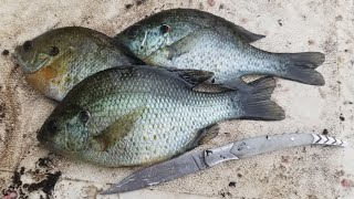 3 Day Fishing Tŗip & Panfish Catch & Cook - Exploring new rivers and lakes