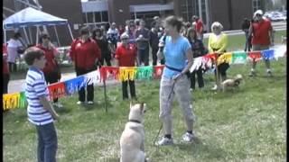 Animatch Dog Clicker Training