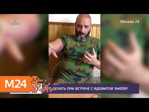 Врачи спасли от ампутации руку Михаила Вишневского после укуса гадюки - Москва 24