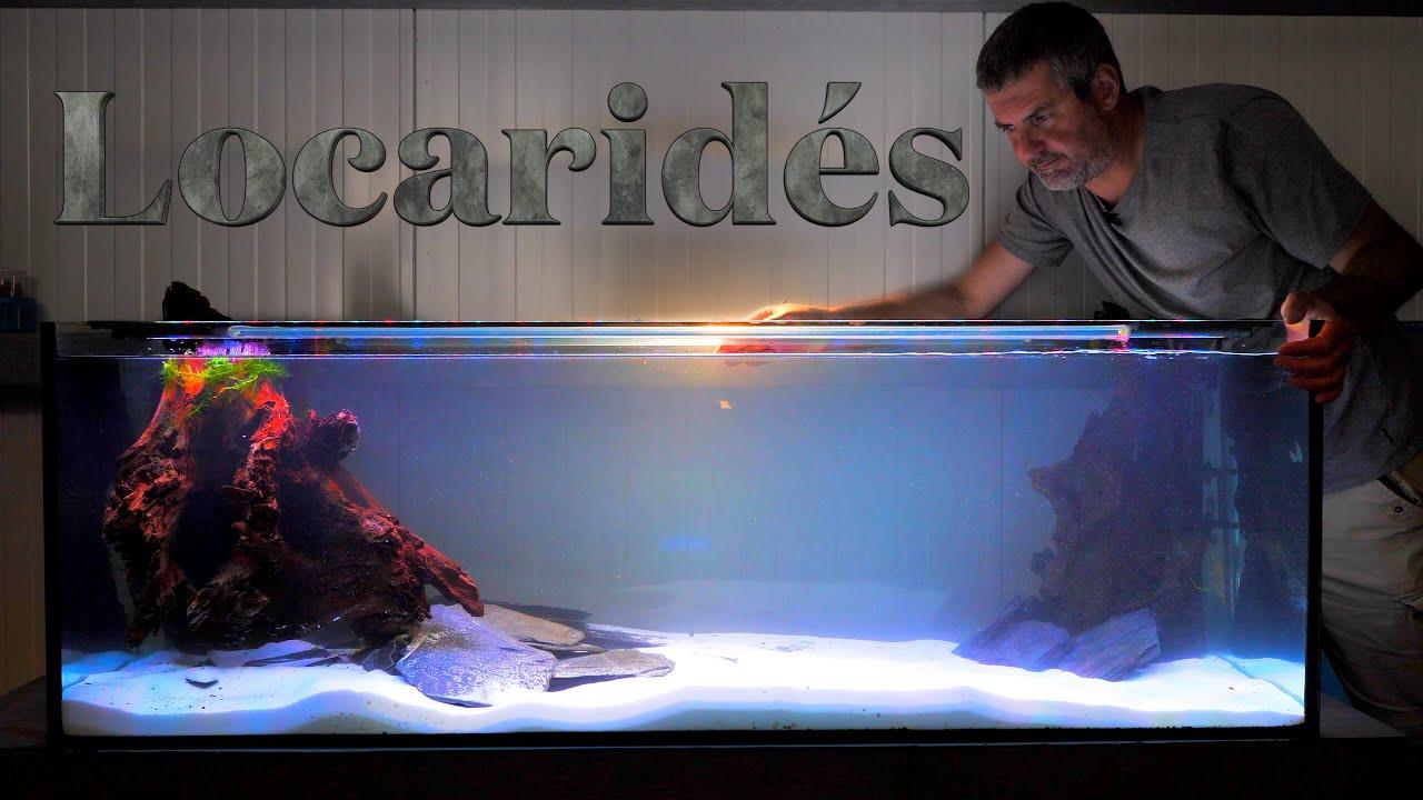 Je démarre un nouvel aquarium de 375 Litres (🌿Floraquatic🐠)