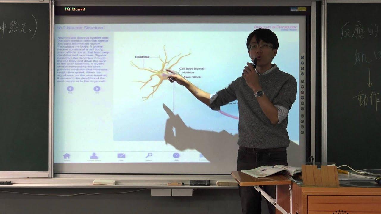 國一上生物5-1神經系統(0)-神經系統動畫
