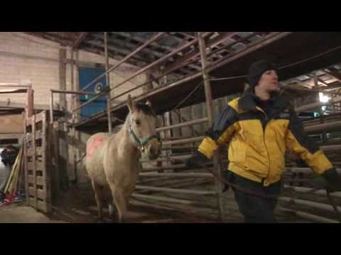 116 horses rescued in Arkansas -- December 14, 2010