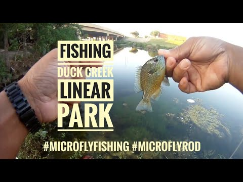 Duck Creek Linear Park Fishing #microflyfishing #microflyrod