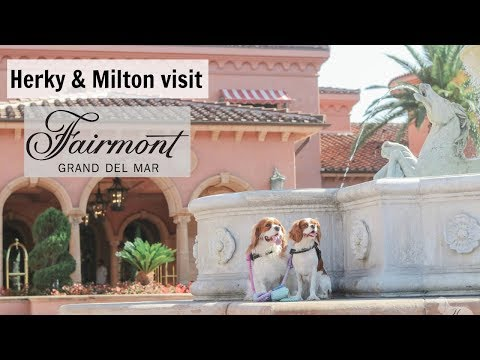 #1 LUXURY HOTEL FOR DOGS Fairmont Grand Del Mar Dog Friendly Overview | San Diego California