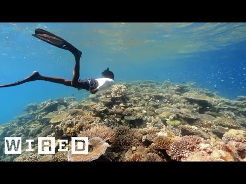 3-D Mapping The World's Coral -- To Save It