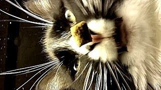 You're Feeding Your Cat Treats And Recording It All Wrong! - YouTube