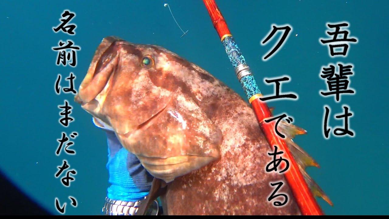【吾輩はクエである】。魚突きとクエ