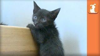 Kitten Parkour Is Impressive  Kitten Love