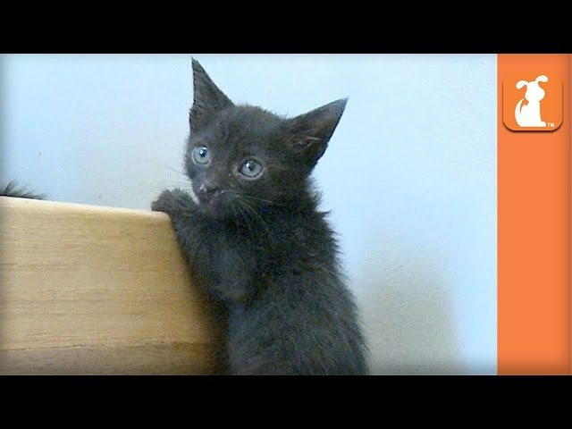 Kitten Parkour Is Impressive - Kitten Love